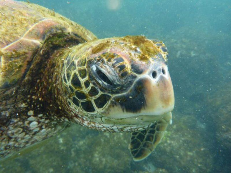 We saw hundreds of huge turtles - photo © Jane and Russell Poulston