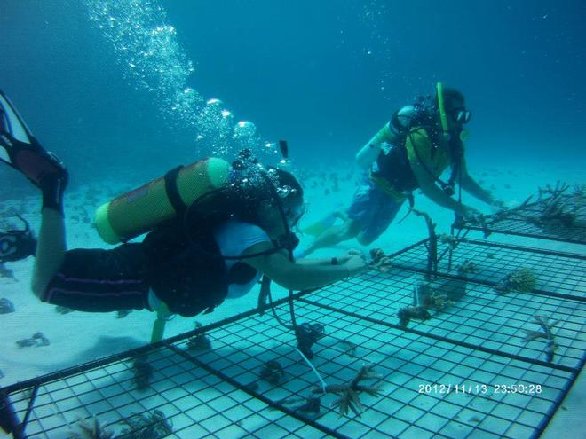 Coral gardening - Fascinating opportunity with OceansWatch © Chris Bone