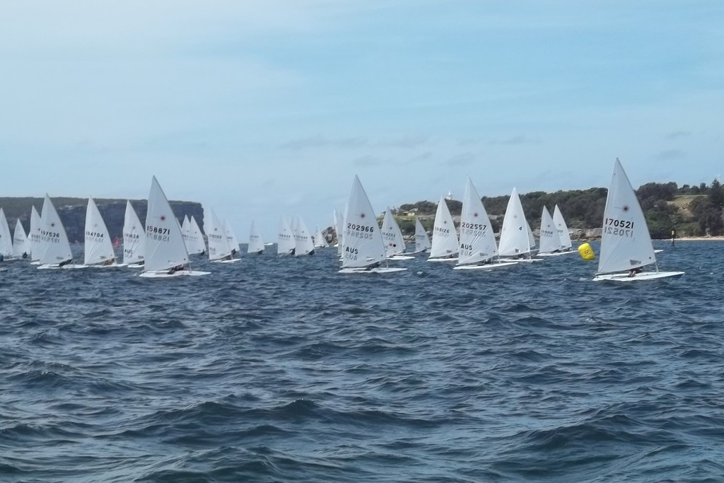 Large Laser fleet expected for the 2013 Regatta - Vaucluse Regatta photo copyright Erin McKnight taken at  and featuring the  class
