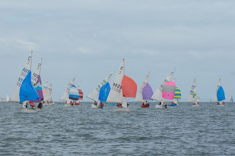 The International Cadet fleet participated in a Sprint Series on the Sunday - Lipton Cup Regatta - photo © Damian Paull