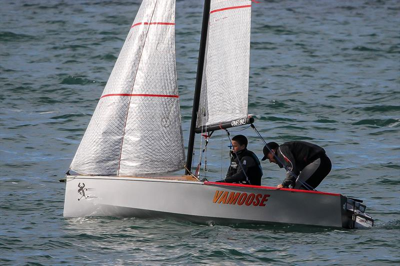 Cherub - Waitemata Harbour - June 2020 - photo © Richard Gladwell / Sail-World.com