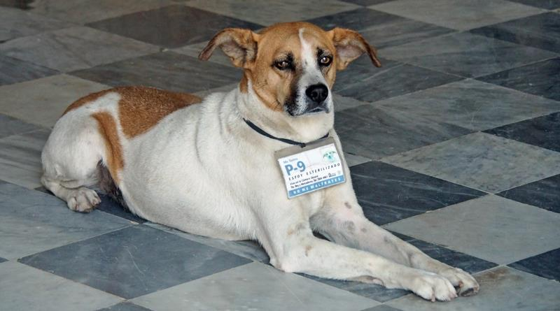 Yep, that is a dog registration tag - Complete with photo ID - photo © Neil Langford, SV Crystal Blues