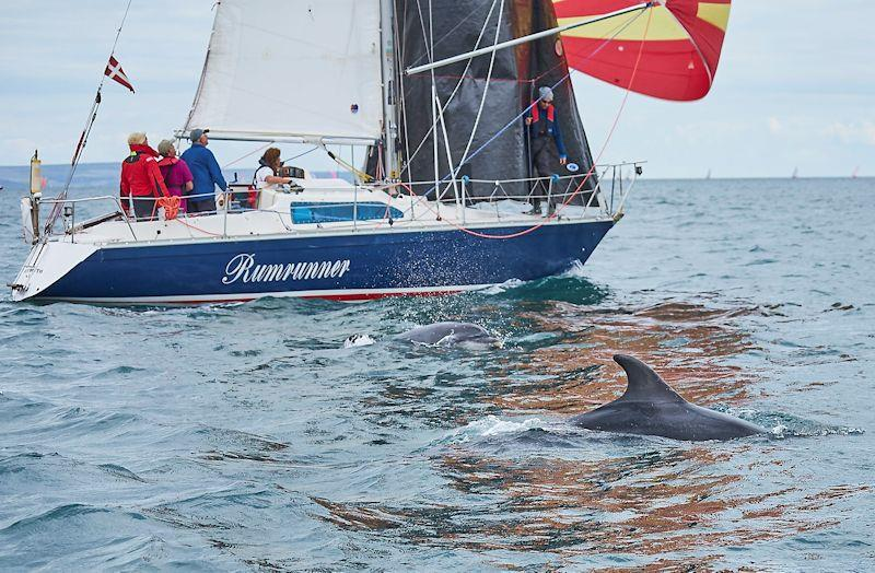 Rumrunner dolphins in the Why Boats Weymouth Regatta - photo © Louis Goldman / www.louisgoldmanphotography.com