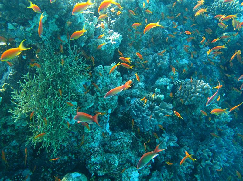 Ocean Sustainability - photo © www.3D.sk