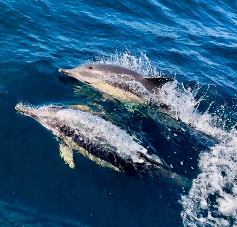 Whilst racing, crews are treated to some spectacular marine life and Pascal Bakker on board the Dutch J/122 Junique Raymarine Sailing Team captured these wonderful dolphins breaching in the bow of the boat - photo © Pascal Bakker
