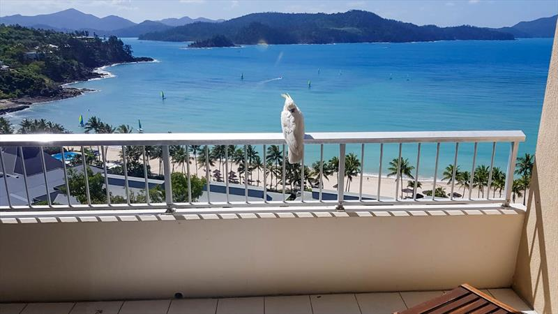 A view to die for - Hamilton Island - photo © Richard Gladwell