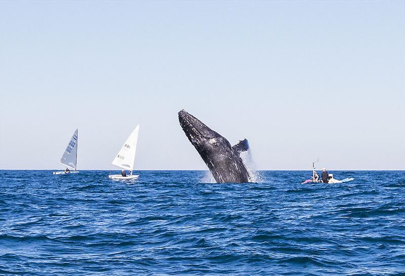 As if answering the request, this Humpback was keen to impress. - photo © John Curnow