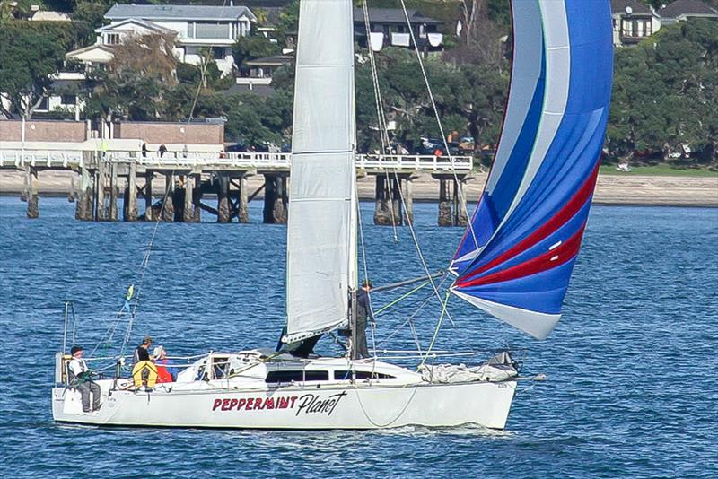 Young 11 - Peppermint Planet - Waitemata Harbour - June 2020 - photo © Richard Gladwell / Sail-World.com