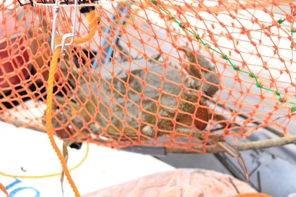 Commercial crabber fined $109,000, loses boat and licence
