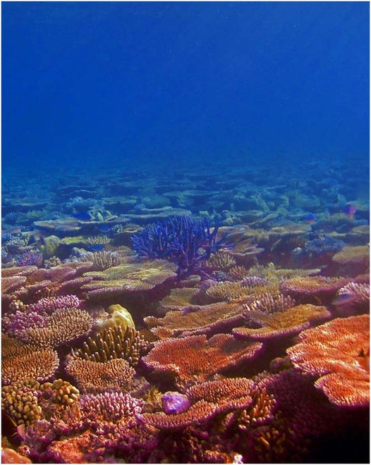 Our coral reefs: In trouble - but tougher than we thought © George Roff