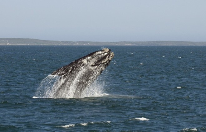 Latest incident - Breaching whales had been sighted in the area, but this incident happened at night ©  SW
