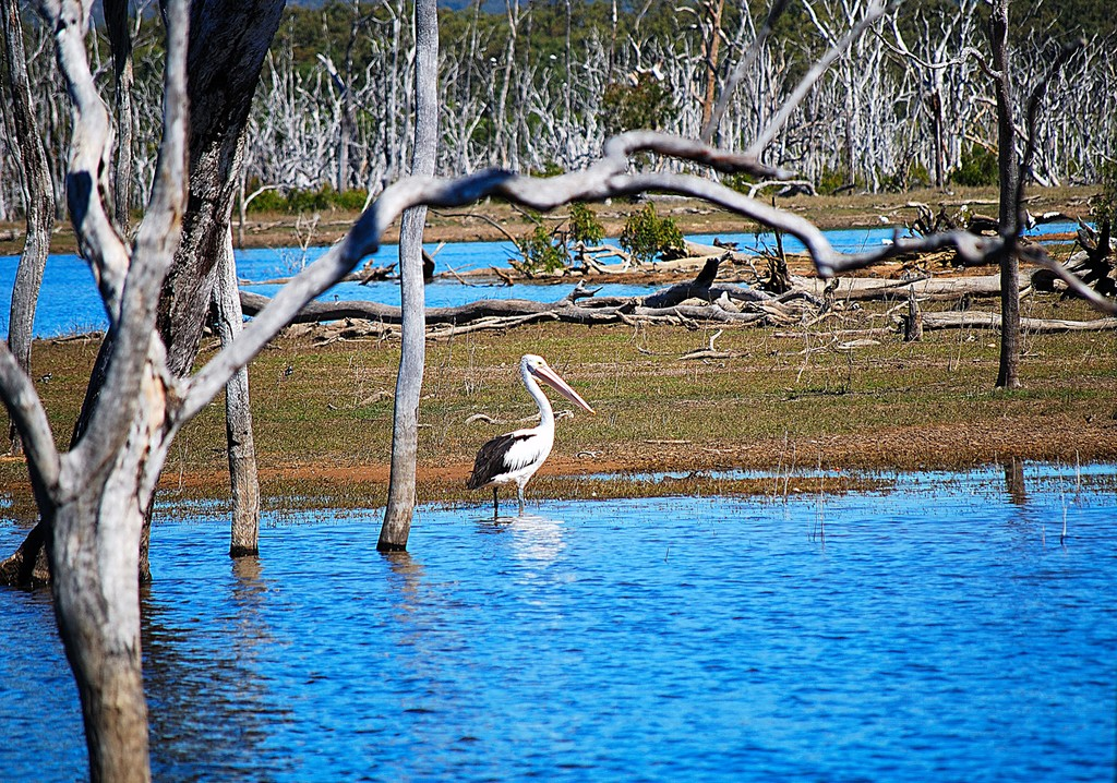 The rise and fall of Queensland's 'Big Barra' dams