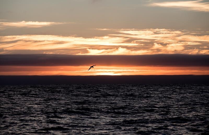 Albatross wanders at sunset in the Southern Ocean - photo © Konrad Frost | Volvo Ocean Race