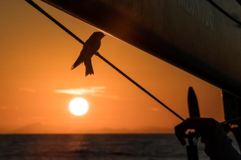 Volvo Ocean Race Leg 8 from Itajai to Newport, day 1 on board Turn the Tide on Plastic. A little visitor at sunset - photo © James Blake / Volvo Ocean Race