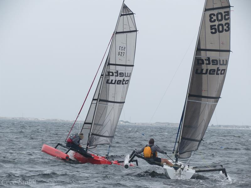 Weta trimarans in action - photo © Cece Stoldt